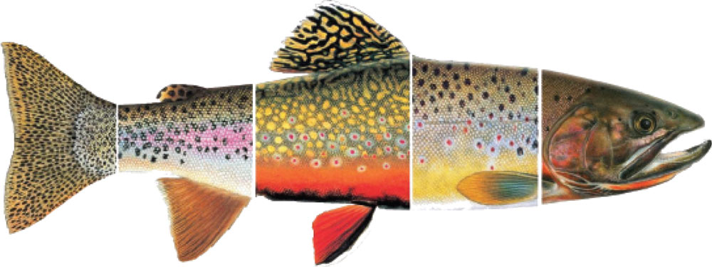 feathered-hook-fly-fishing-multi-trout