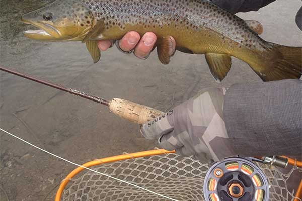 Fly fishing in wyoming feathered hook of jackson hole for Wyoming out of state fishing license