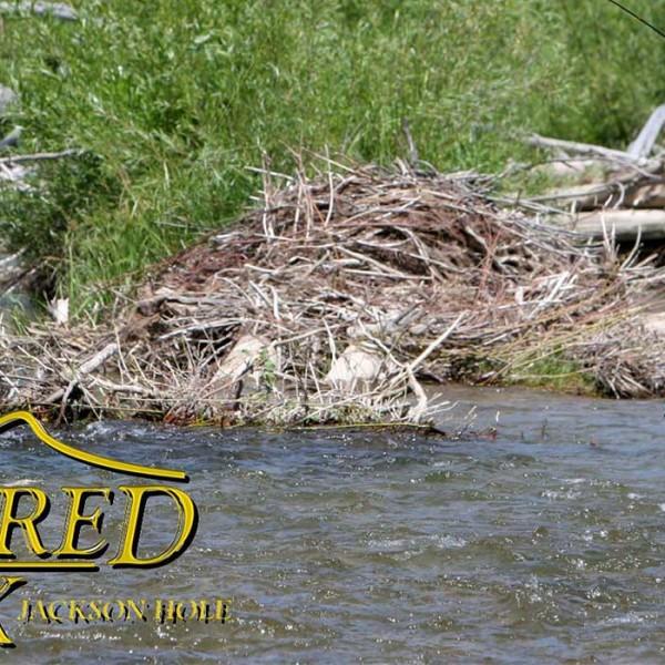 header-green-river-wyoming-fishing