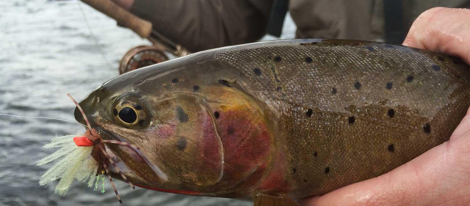 Wyoming fly fishing blog feathered hook of jackson hole for Fishing license wyoming
