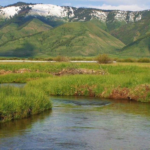 header-spring-creek-meadows