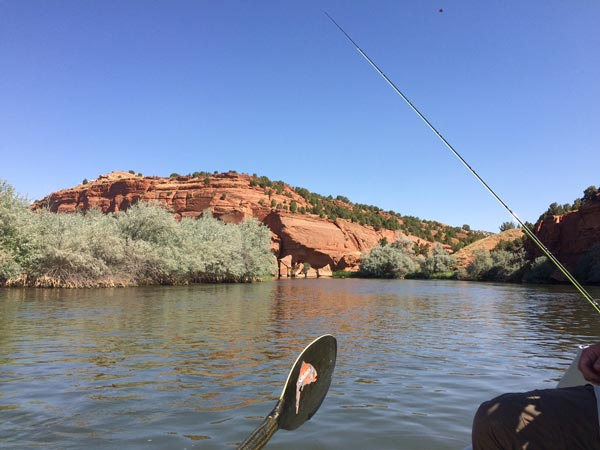 Wyoming fly fishing waters rivers feathered hook for Jackson hole fly fishing