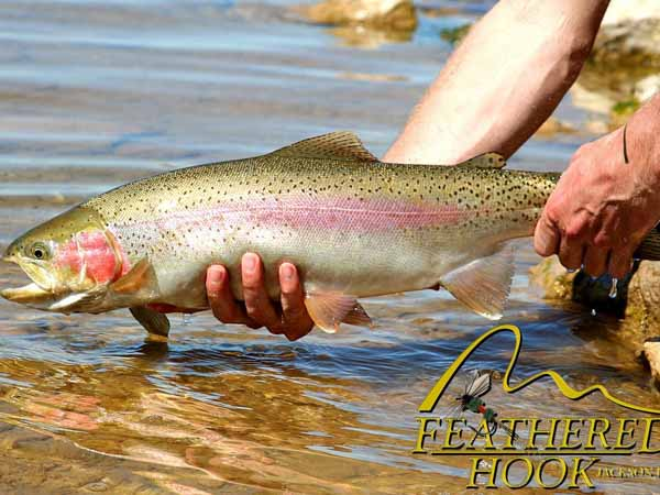 fish-smiths-fork-wyoming-big-rainbow
