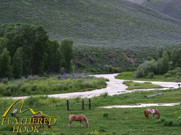 fish-smiths-fork-wyoming-horses