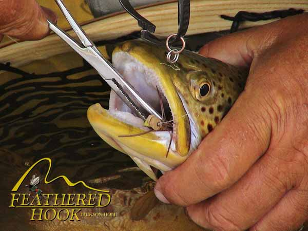 green-river-wyoming-fishing-fish-close-up