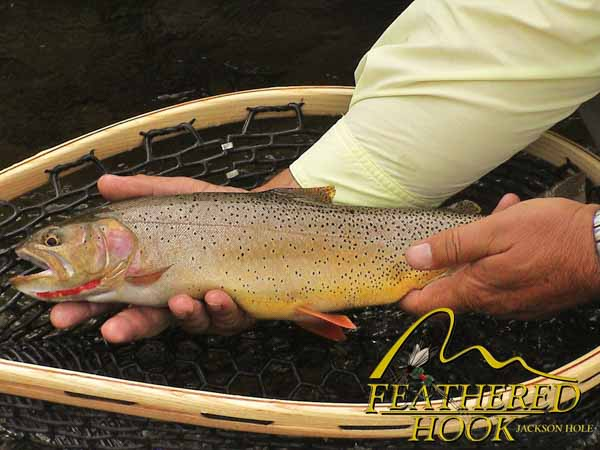 green-river-wyoming-fishing-holding-trout
