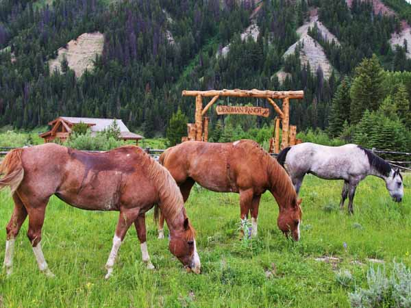 greys-river-wyoming-fishing-horses