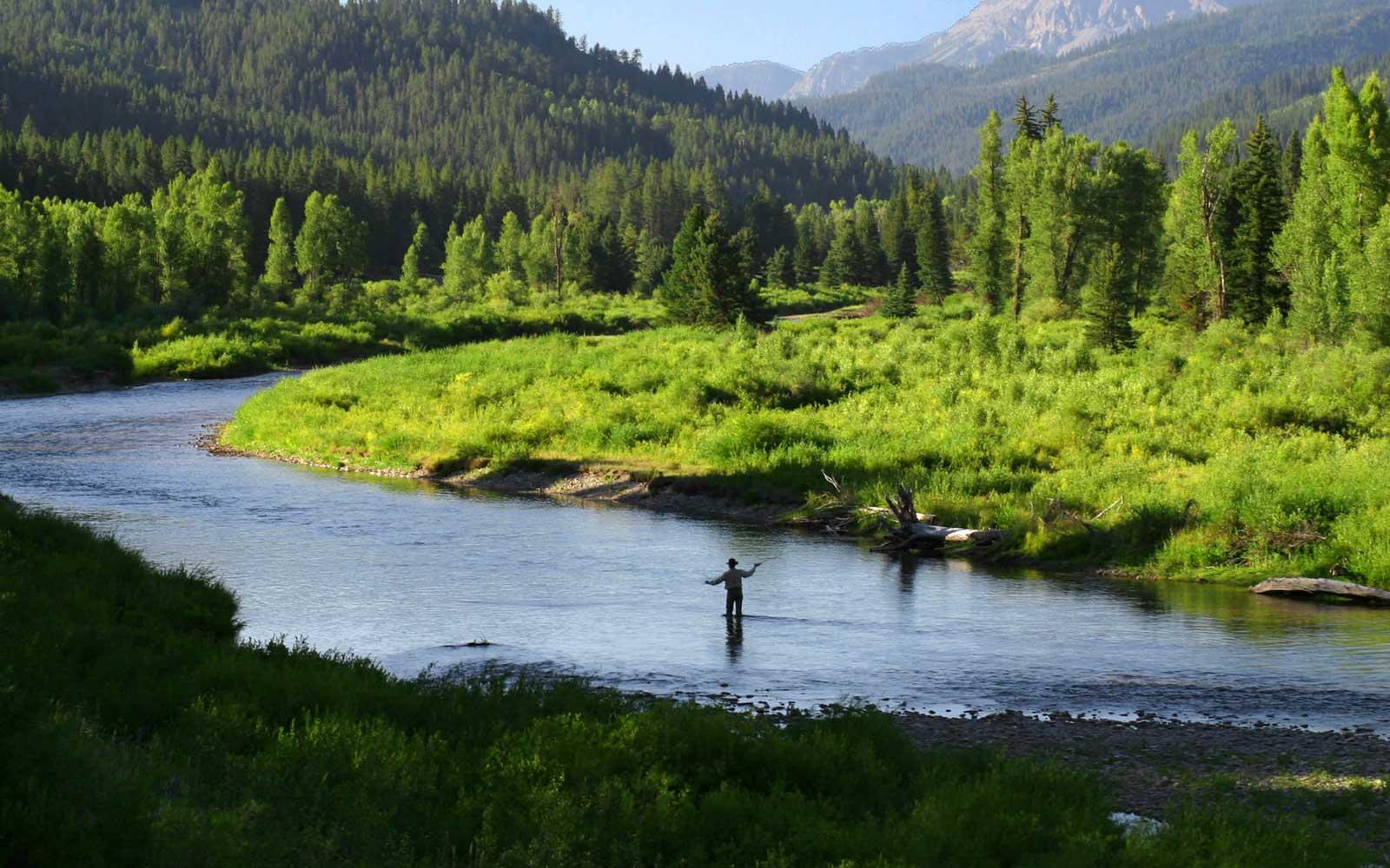 Spring Creek & Stream Fishing