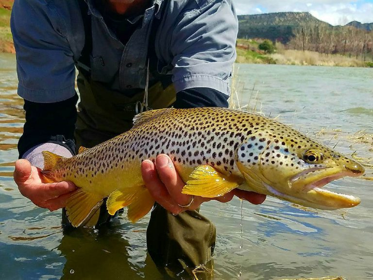 Newfork River Fly Fishing