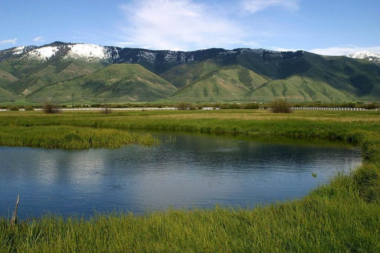 Spring Creeks Fly Fishing